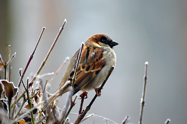 small bird on a twig