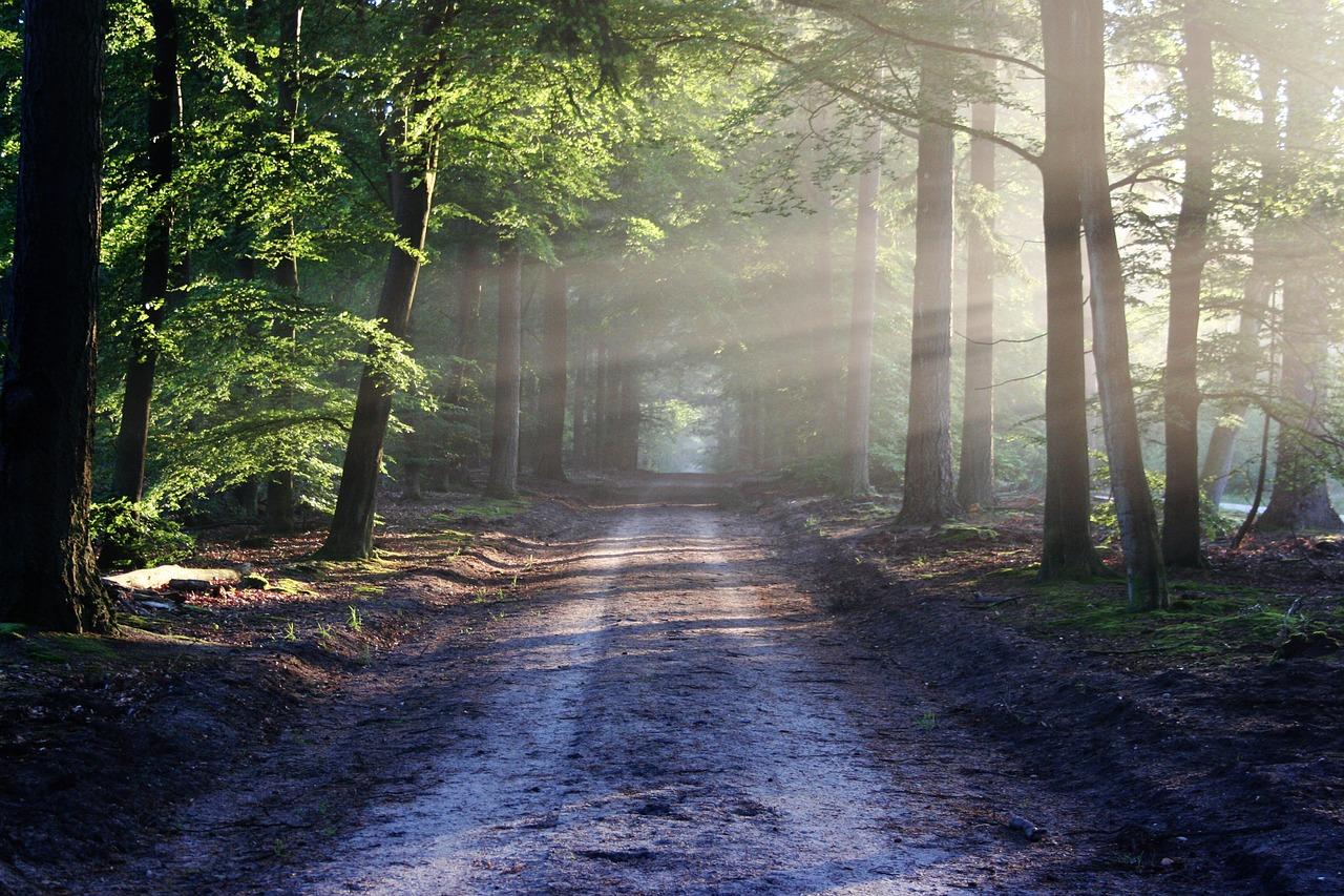 a tree lined path
