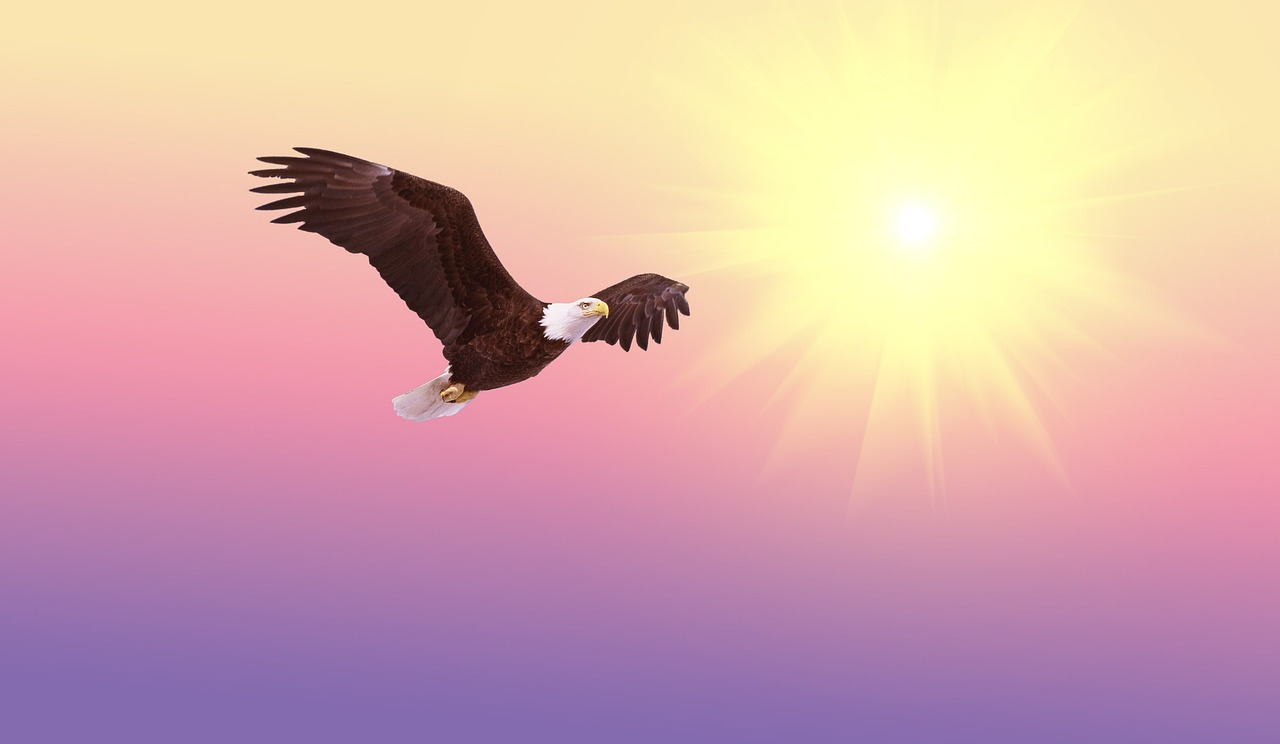 eagle flying into sun